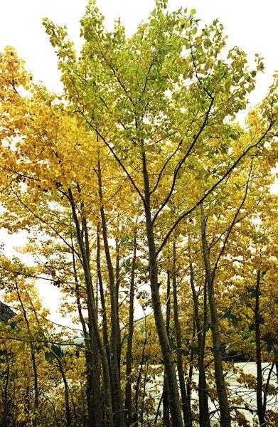 Canada_2001-05-32
