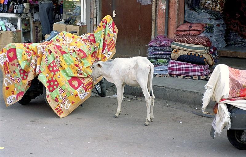 2005-india-rol05-0024