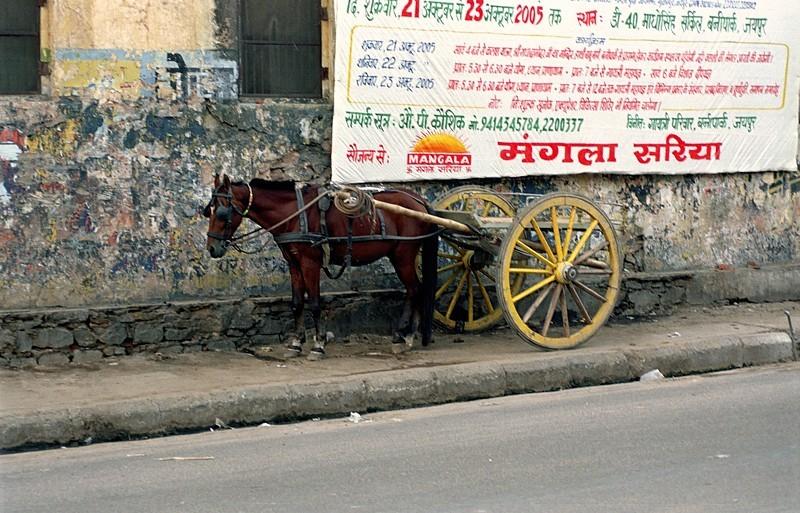 2005-india-rol06-0021