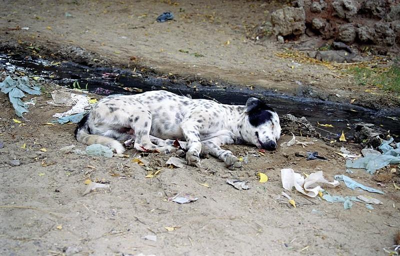 2005-india-rol17-0036