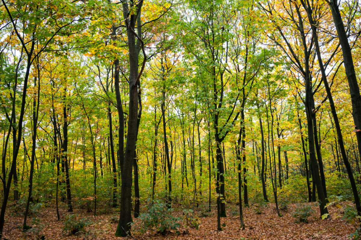 October 17th, 2015: Autumn