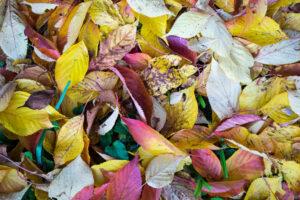 October 29th, 2015 – Autumn