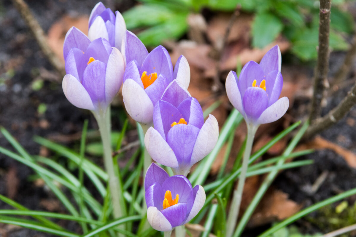 March 4th, 2017 – Spring is on it way?